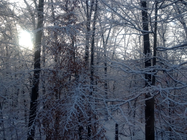winterytrees